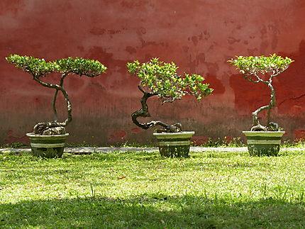 Bonsaïs à Tainan - temple de Confucius