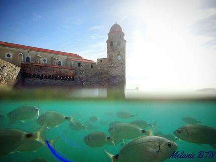 Baignade avec les poissons de Collioure !