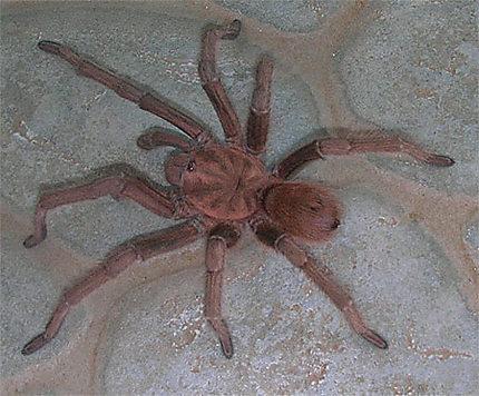 Une araignée en Martinique