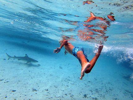 Course avec un requin