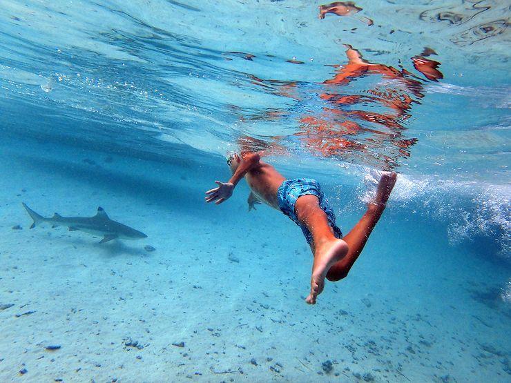 Course avec un requin, Lagon de Fakarava, Polynésie française