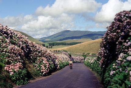 Sur l'île de Terceira