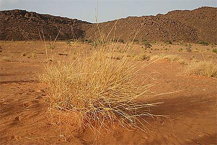 Buisson de désert