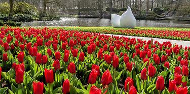 La Hollande et ses tulipes à vélo