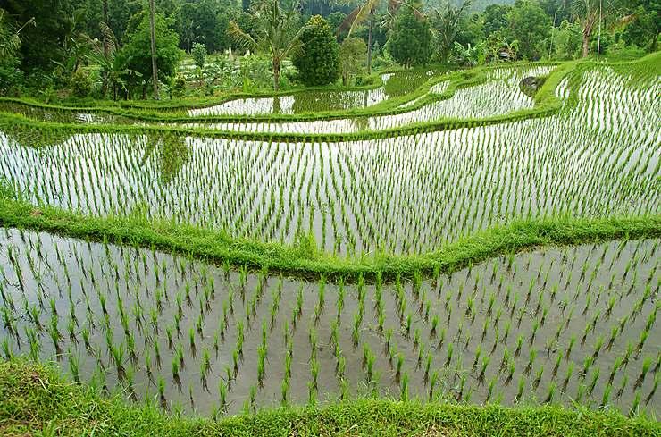 Vietnam | Sites Internet de référence | Routard.com