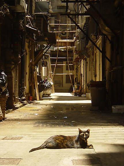 Ruelle de Wan Chai