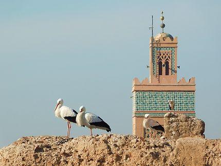 Marrakech - Entre 2 prières