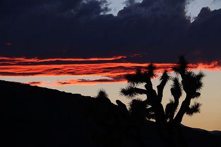 Sunset sur Joshua Tree N.P.