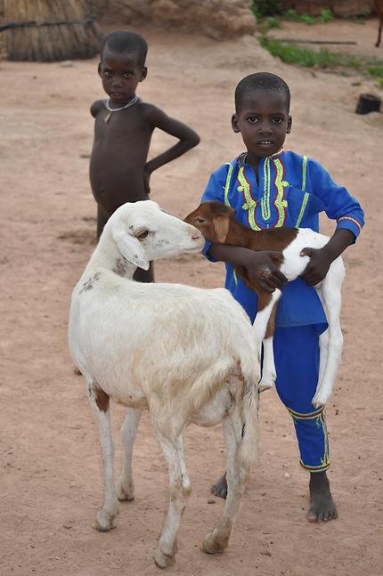 La chèvre, précieuse pour les pasteurs Peulhs