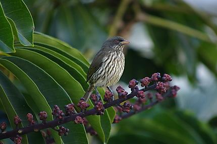 Oiseau (Esclave)
