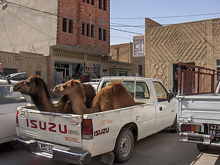 photo drole tunisie