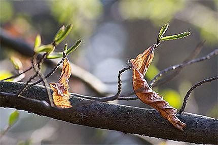 Bébés feuilles et feuilles mortes
