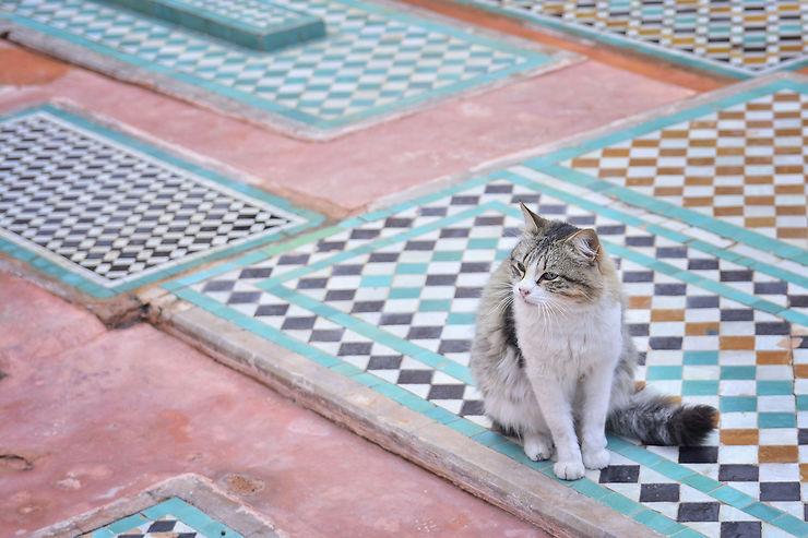 Les chats de Marrakech, les rois et leurs tombeaux