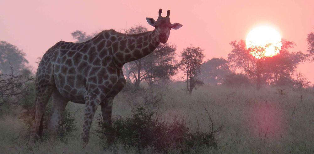 Retour de notre séjour de 12 jours en Afrique du Sud lors des vacances de Pâques 2018