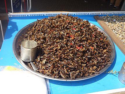 Petits insectes grillés