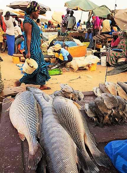 Au marché aux poissons