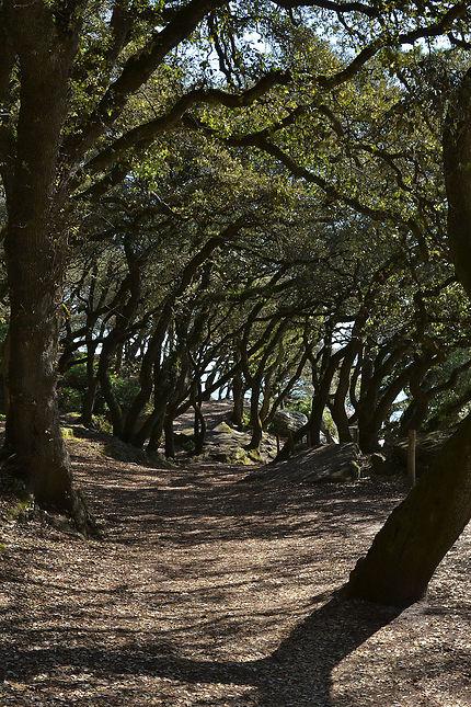 Le Bois De La Chaise, île de Noirmoutier