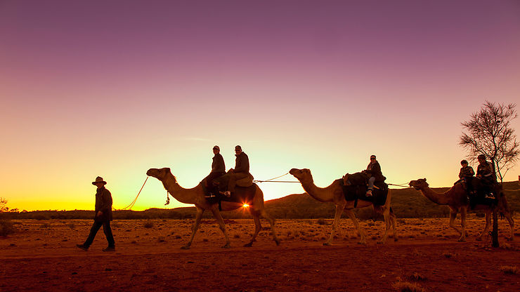 Dromadaires, Alice Springs, Territoire du Nord
