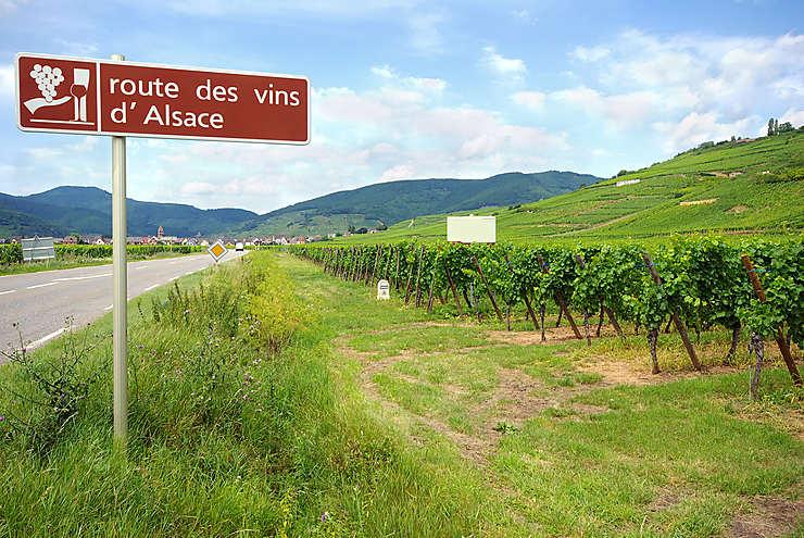 Balades au cœur du vignoble alsacien