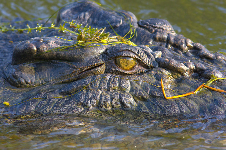 Crocodile, parc national de Kakadu, Territoire du Nord