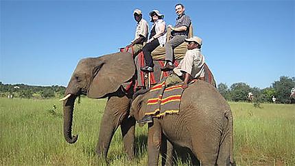 Balade sur une élephante