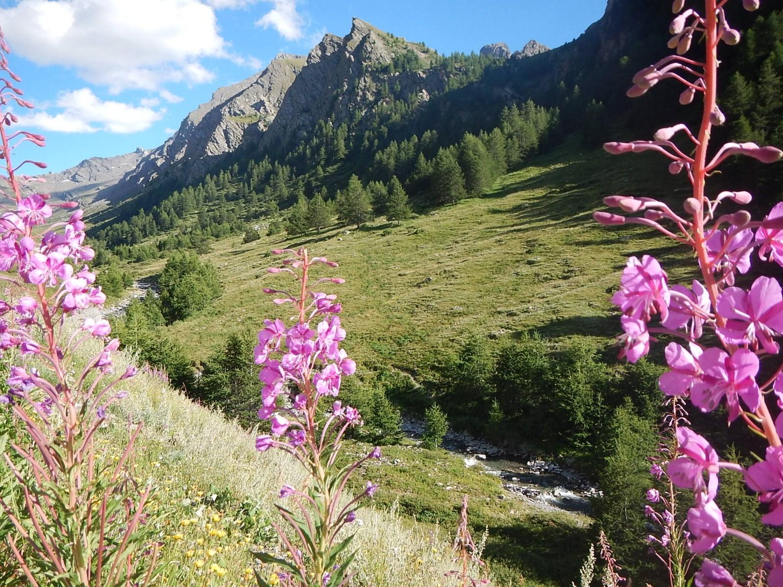 Queyras - Alpes