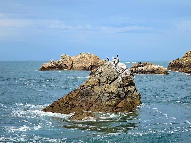 Les Sept-Îles, paradis des oiseaux marins