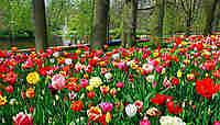 6 fêtes fleuries dans le monde