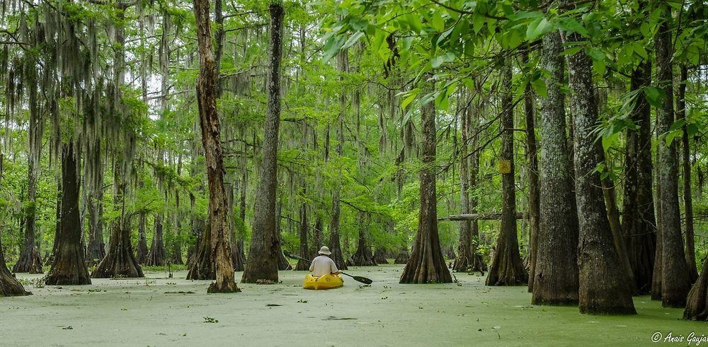 5 jours à la découverte de la Louisiane