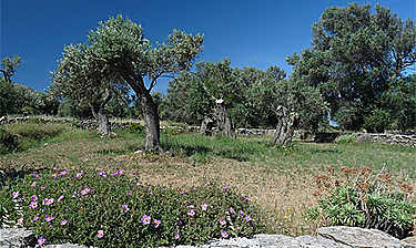 Naxos (Cyclades)