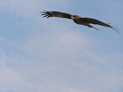 Toba - Un aigle de mer