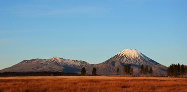 Nouvelle-Zélande : Kiwi dans l