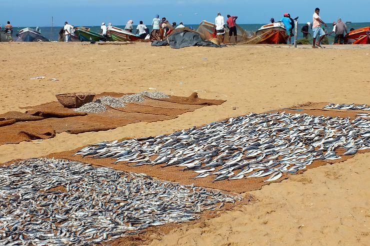 Pêcheur à Negombo, Sri Lanka