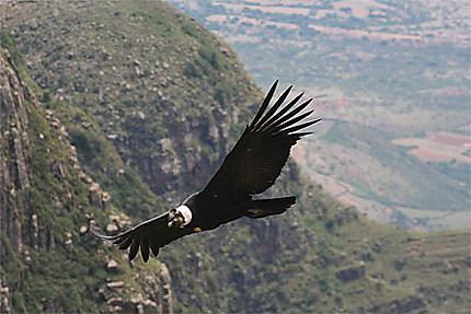 Bon plan tourisme solidaire peu connu dans la magnifique vallée des condors Tarija Bolivie