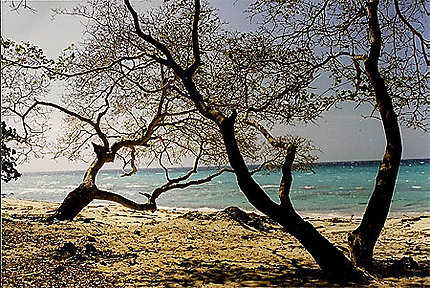 La playa blanca
