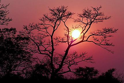Lever du soleil à la sortie du camp Skukuza