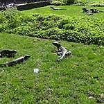 Parc aux iguanes