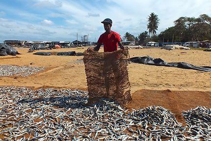 Pêcheur à Negombo au Sri Lanka