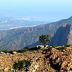 Aulne au soleil contemplant la baie de Calvi