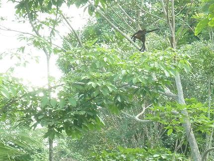 Nord du Costa Rica, petit village de Caño Negro