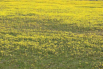 Tout jaune