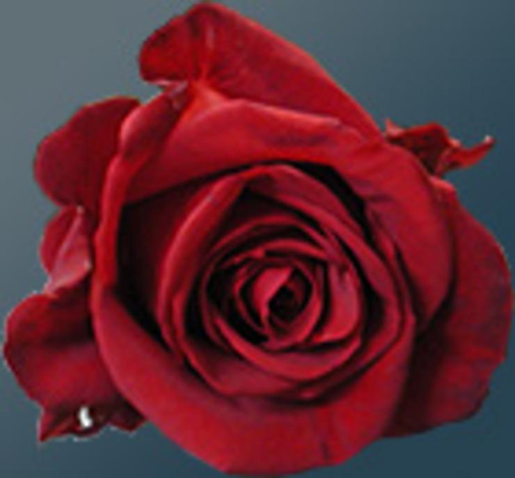 Festival de la rose à Kazanlak
