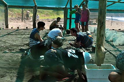 Dans la ferme d'élevage aux tortues