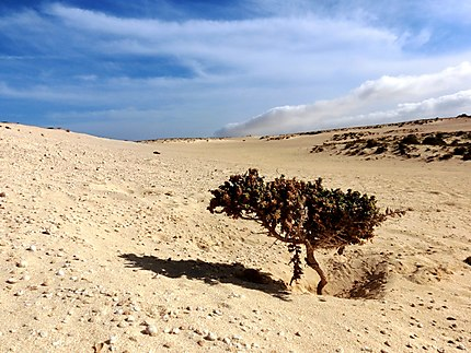 Les grands espaces des dunes de Corralejo