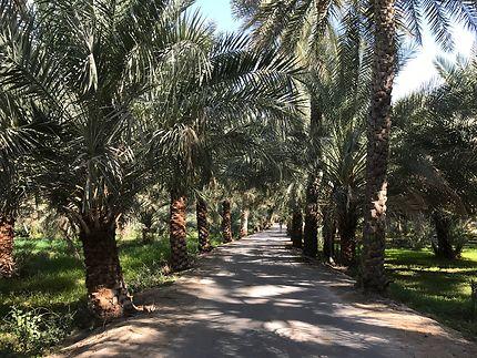 Au milieu de la palmeraie