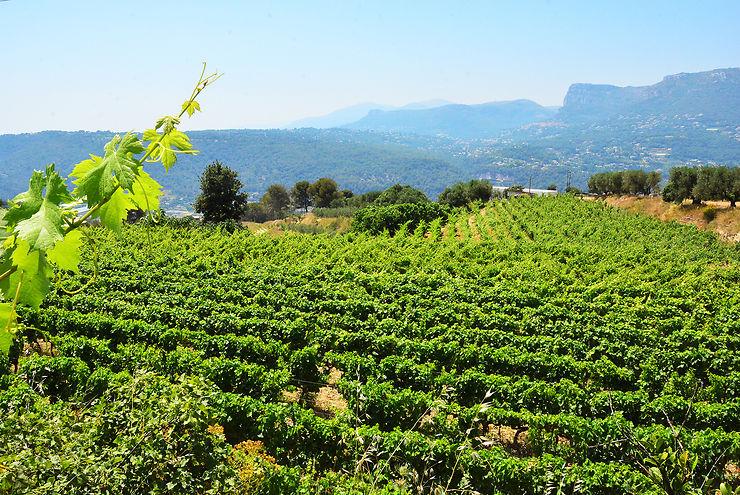 Bellet : le fameux vin de Nice