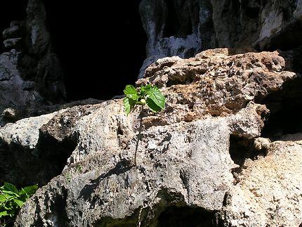 Plante en résistance, seule sur son caillou