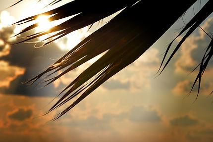 Coucher de soleil derrière les palmiers