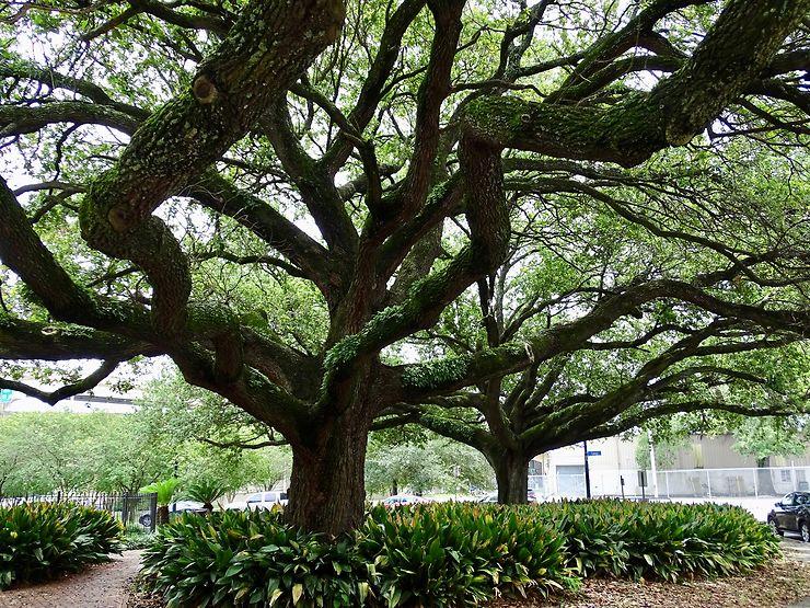 City Park de La Nouvelle-Orléans