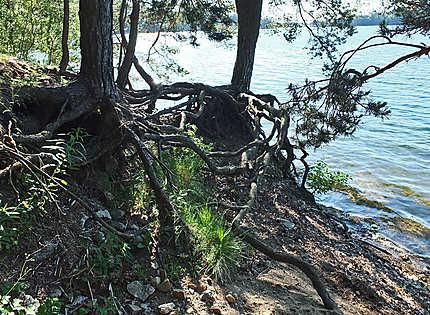 Les racines cherchent l'eau